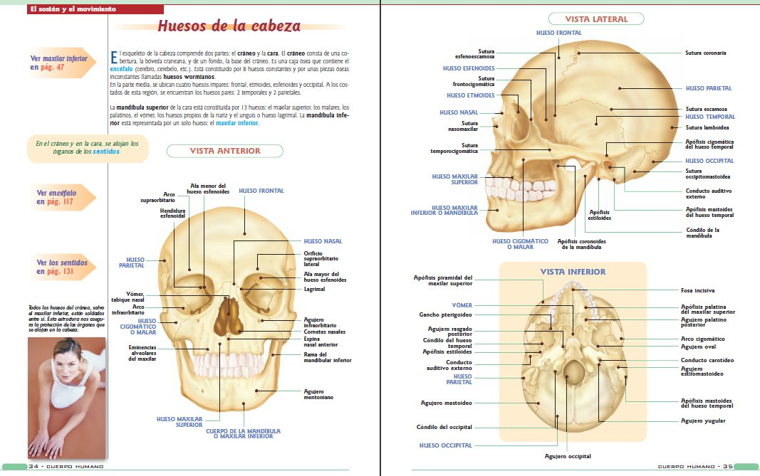Anatomía y fisiología del cuerpo humano | LibrosVirtual