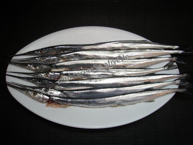 zargana balığı resmi