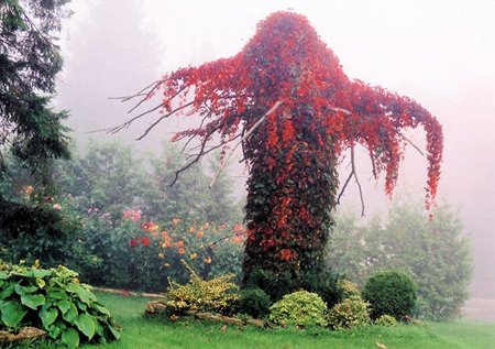 [tree4.jpg]