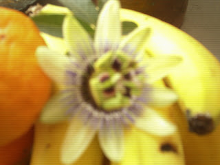 Flor del Mburucuyá