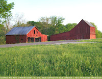 Two red barns in evening light