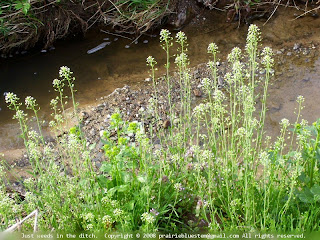 Ditch weeds