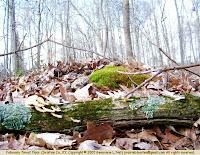 Moss, lichens, fungi