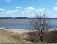 Silver maple at lake edge