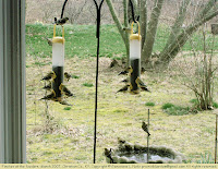 Goldfinches at thistle seed feeders