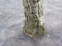 Tree surrounded by asphalt
