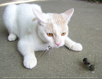 Casper observes mating cicadas
