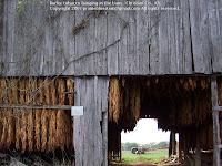 Burley barn