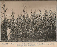 Tall corn in the early 1920s
