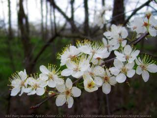 Spring blossoms?