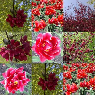 Vakre blomster i Ravnedalen