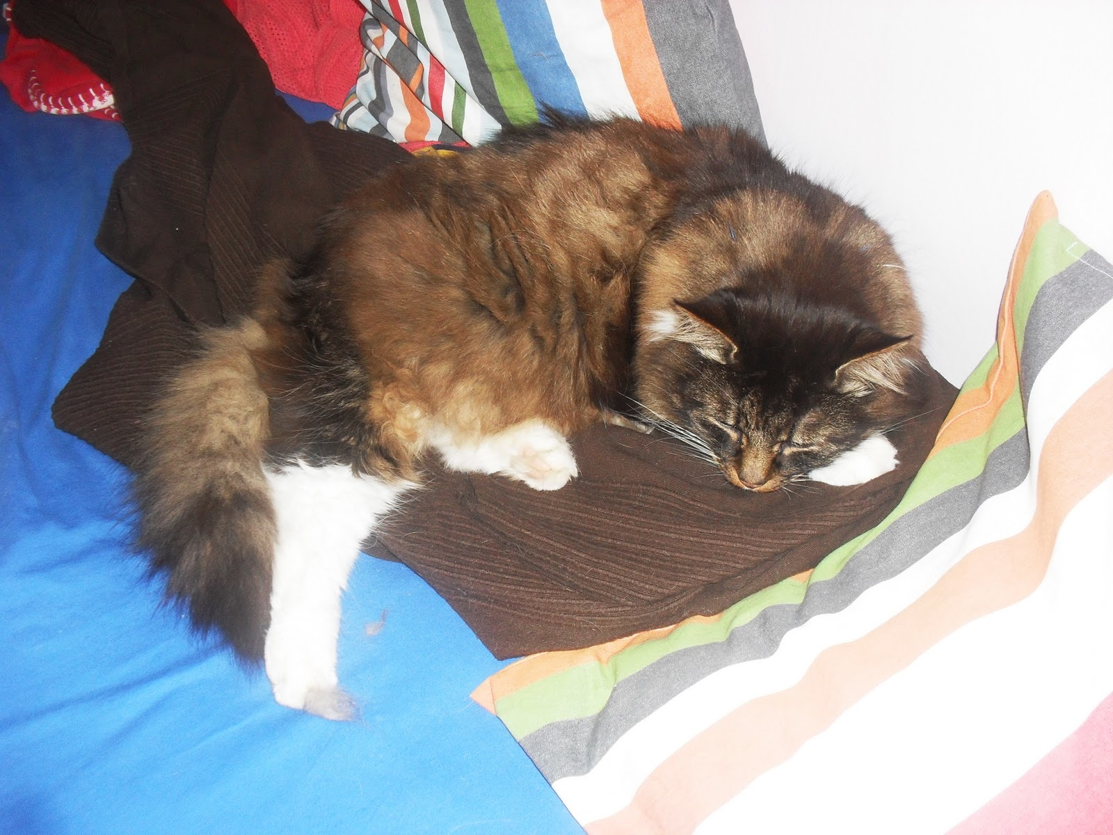 Katt Bubblig Mage