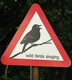 [wildbirdsing]