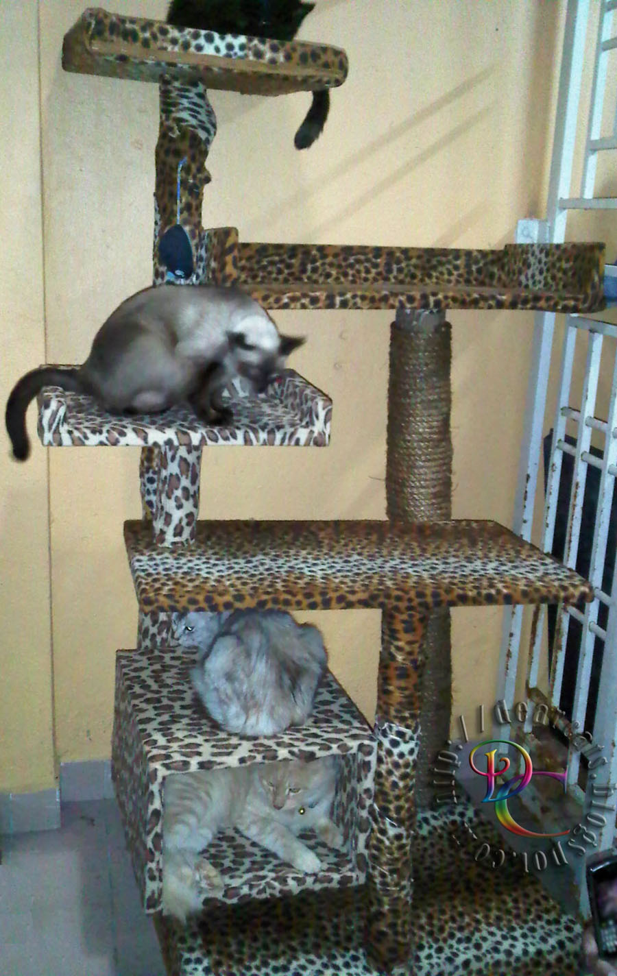 My Dearcats Dc Pokok Kucing Cat Tree Yeahh Our Diy Cat Tree Is Done