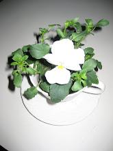 Underbara blomma