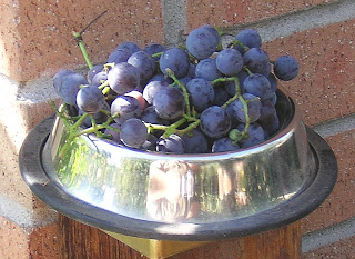 grapes in shade