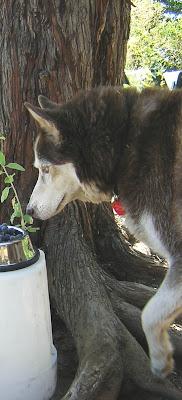 Tucker checks bowl of grapes
