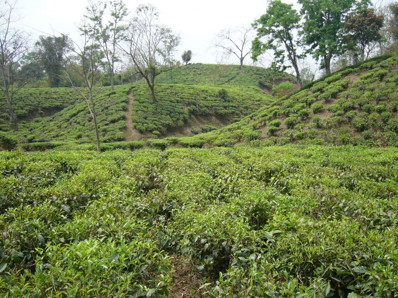 nature beauties  nature  bangladesh