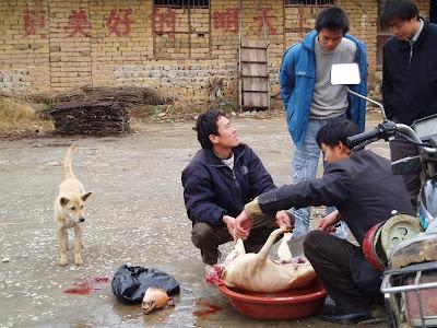 статус люди убивают животных для шуб
