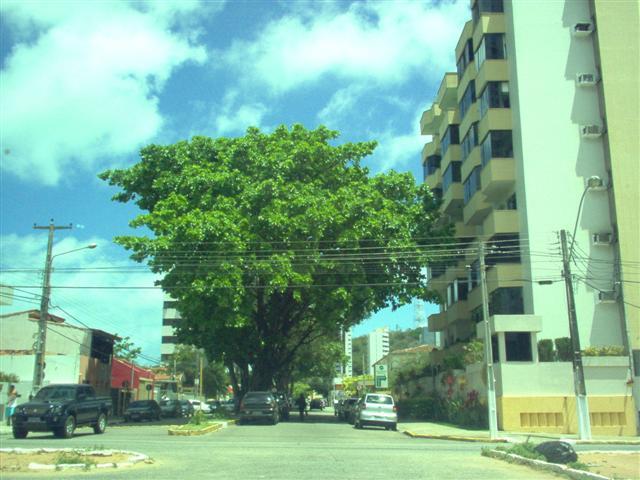 Árvores de Petrópolis