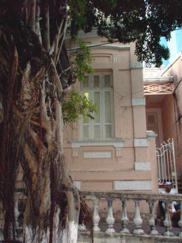 Árvore e janela