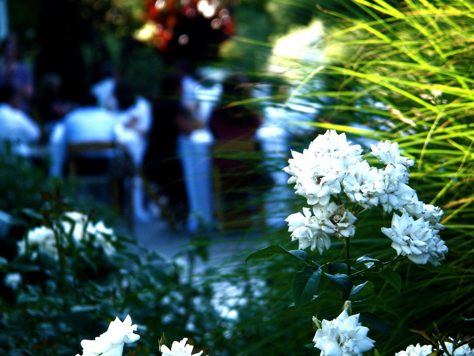 [wedding2+001-1.jpg]