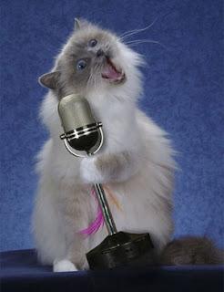 Gatos Funnypictures