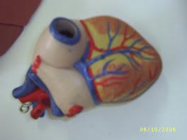Irrigación, inervación, grandes vasos del corazón