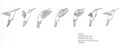 haiku bird: Gravity: drawing of hummingbird flight pattern