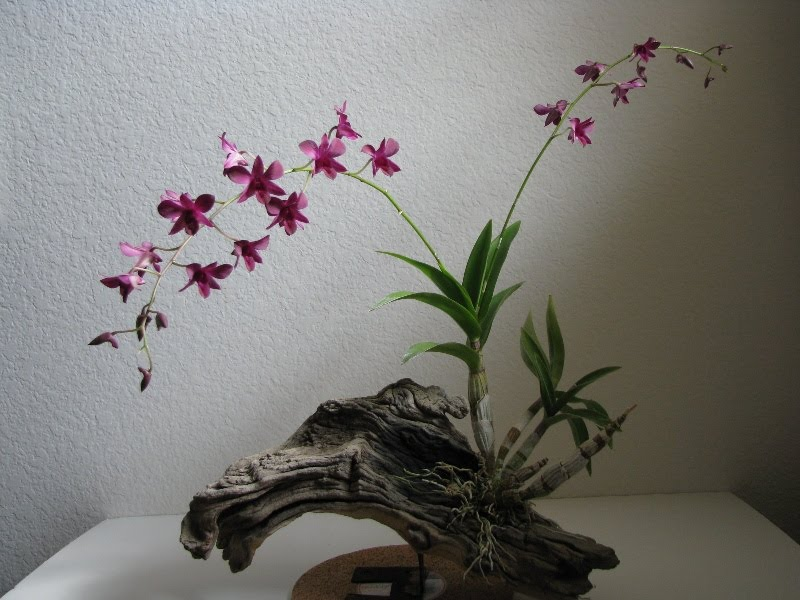 Welcome To Orchid Mounting Techniques