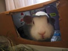Rabbit X