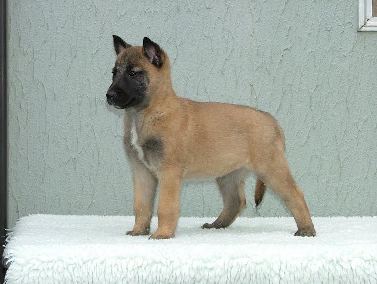 Keisha pup