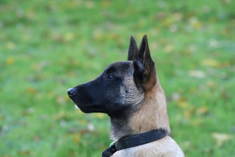 Kody puppy