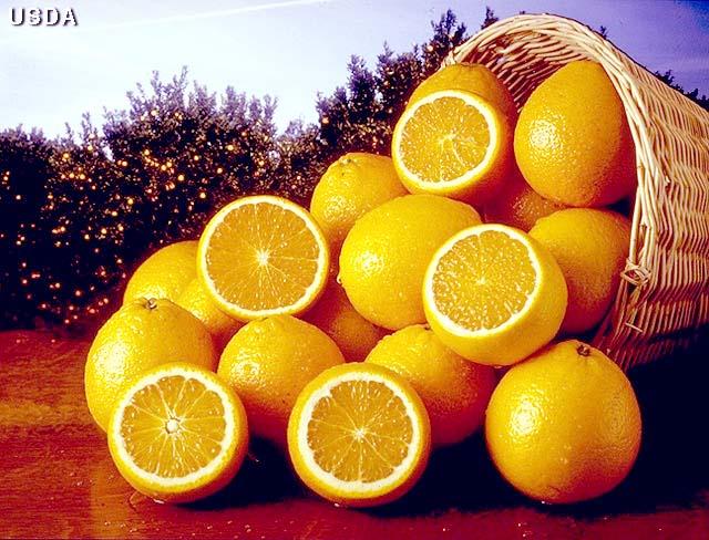 [oranges+in+a+barrel.jpg]