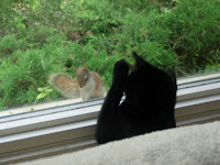 Black cat and squirrel at window