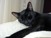 Black Cat Sleeping
