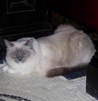 Matilda Algonquin Cat