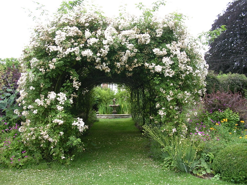 Gift Plants and Plant Ideas: Making Your Garden a Private ...