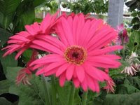 flores do jardim da Laine