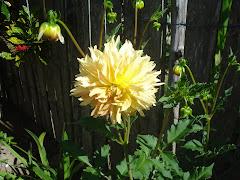 Encontrei no jardim da minha tia Raquel