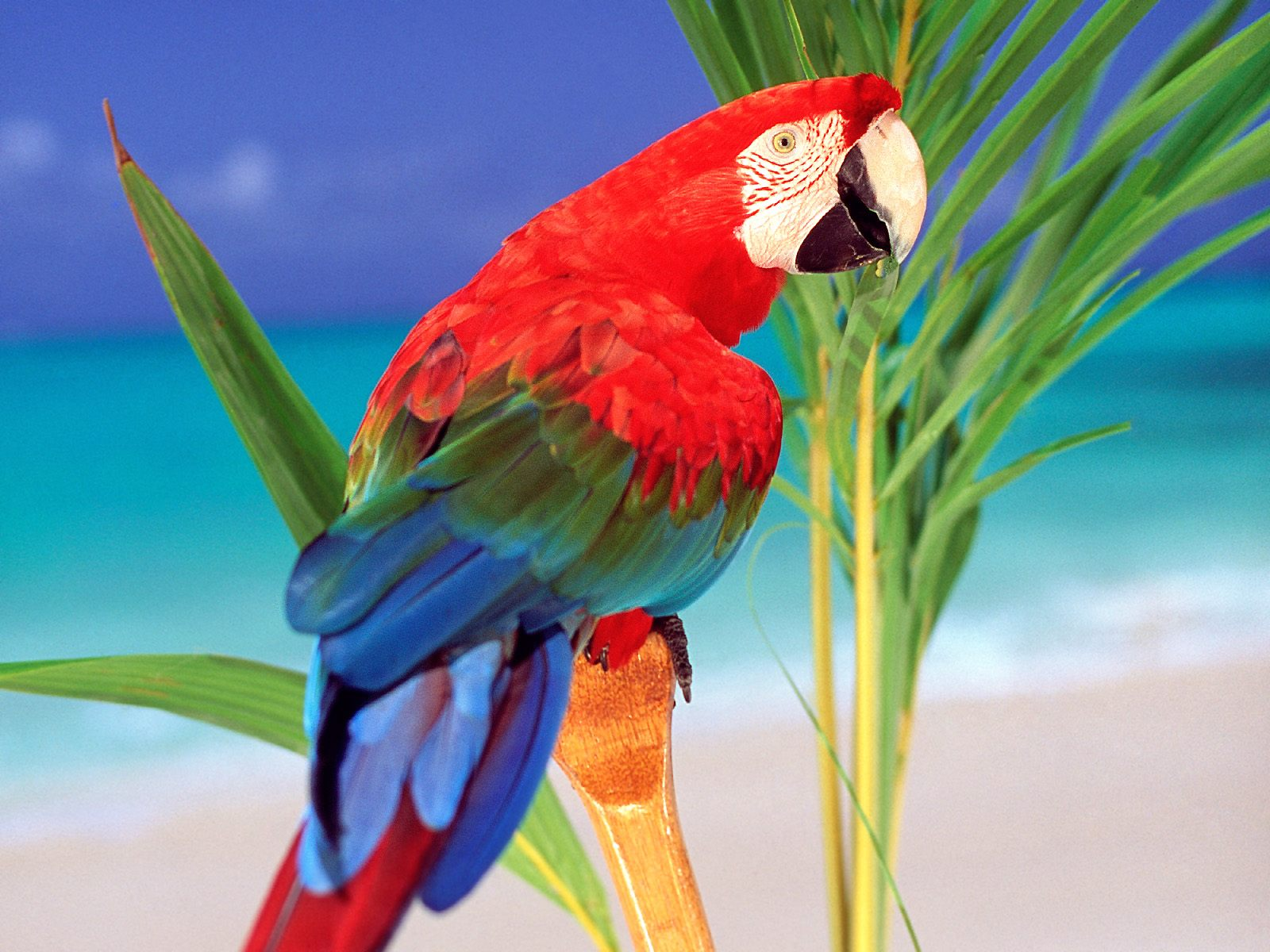 Parrot Picture - Wide 1600 X 1200