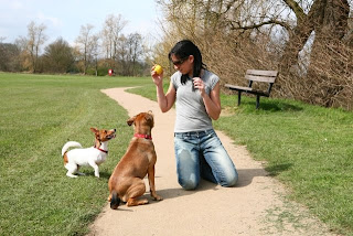 Cómo entrenar a su perro para encontrar oro