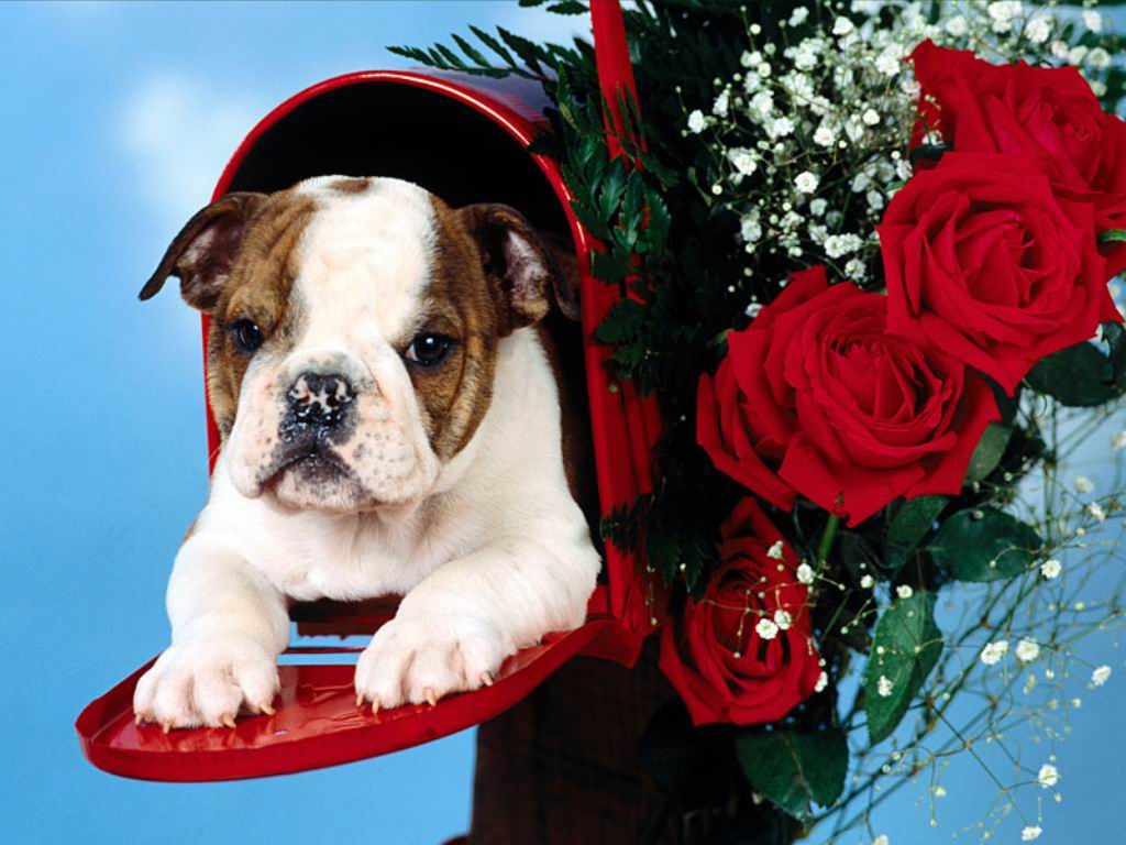 Cute Christmas Puppies And Dogs Free Christian Wallpapers