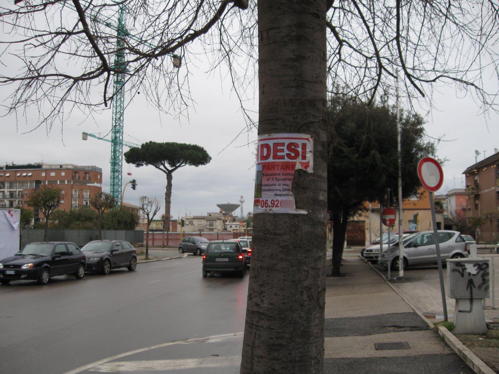 Degrado apriliano 2010 05 09 for Alberi in vendita