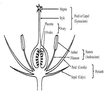Lara Science: Flower dissection