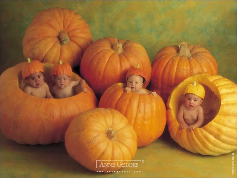 angel baby wallpaper cute baby with pumpkin baby wallpaper 1280x800 title=