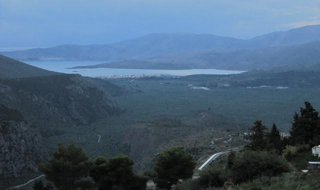 Mar de olivos en Delfos