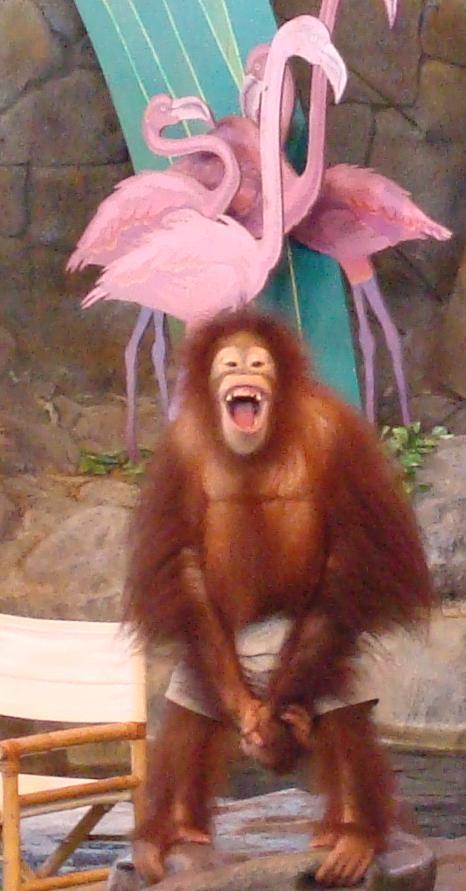 [orangutan.JPG]