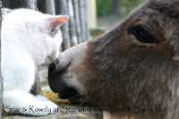 cat and donkey touching noses