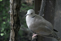 dove sitting on a branch